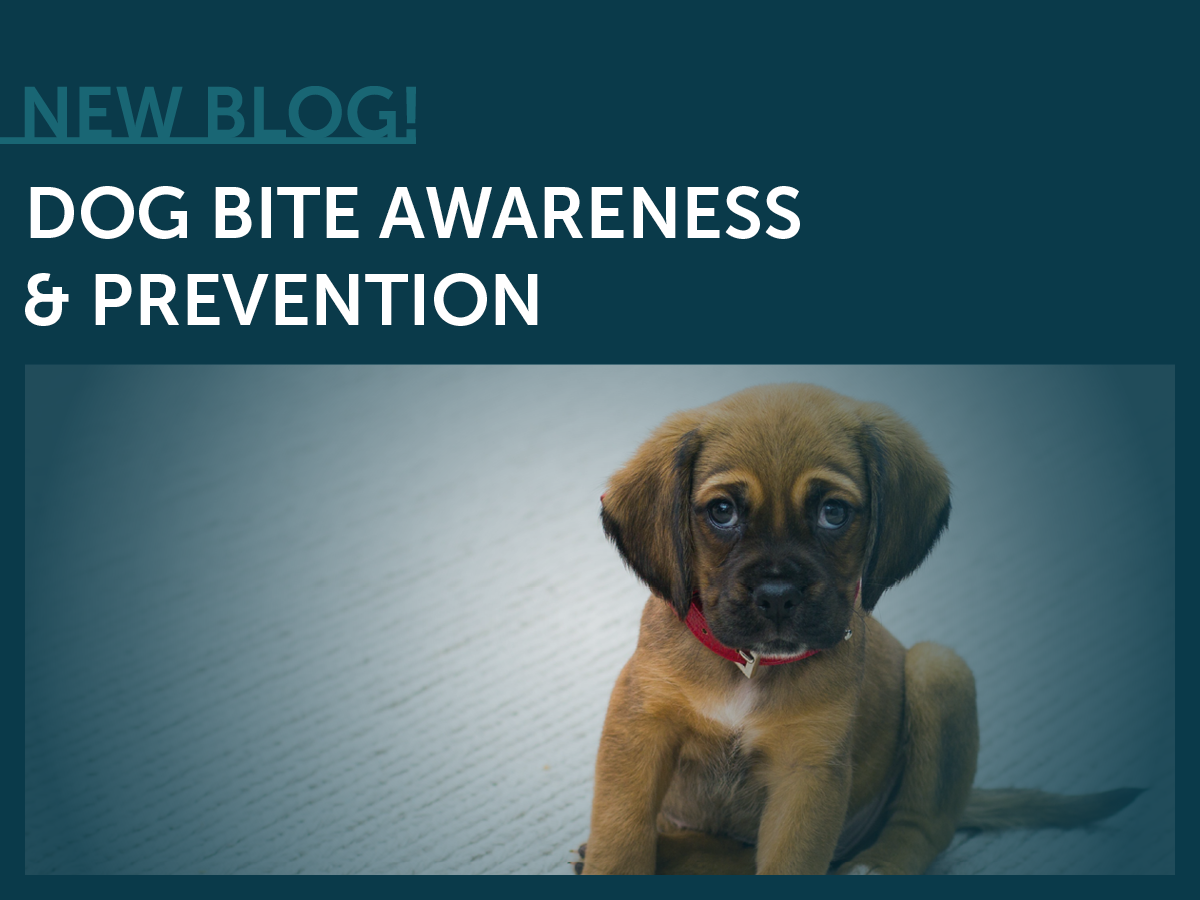 Puppy/Doggy, Dog Bite Prevention & Awareness