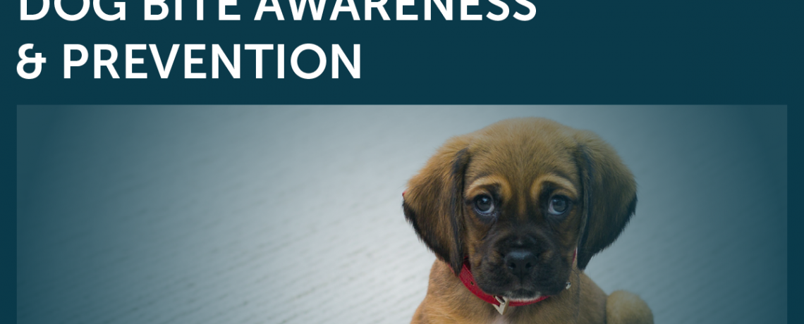 Dog Bite Awareness & Prevention