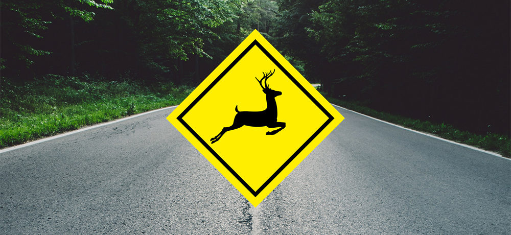 Wildlife Crossing: Tips to Avoid Animal-Vehicle Collisions